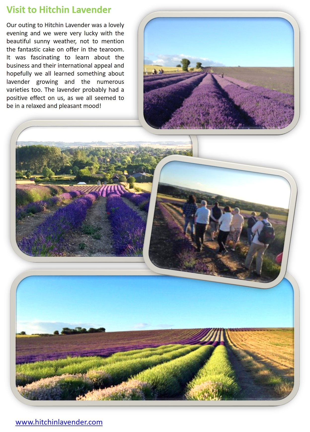 Gallery - Visit to Hitchin Lavender[4047]
