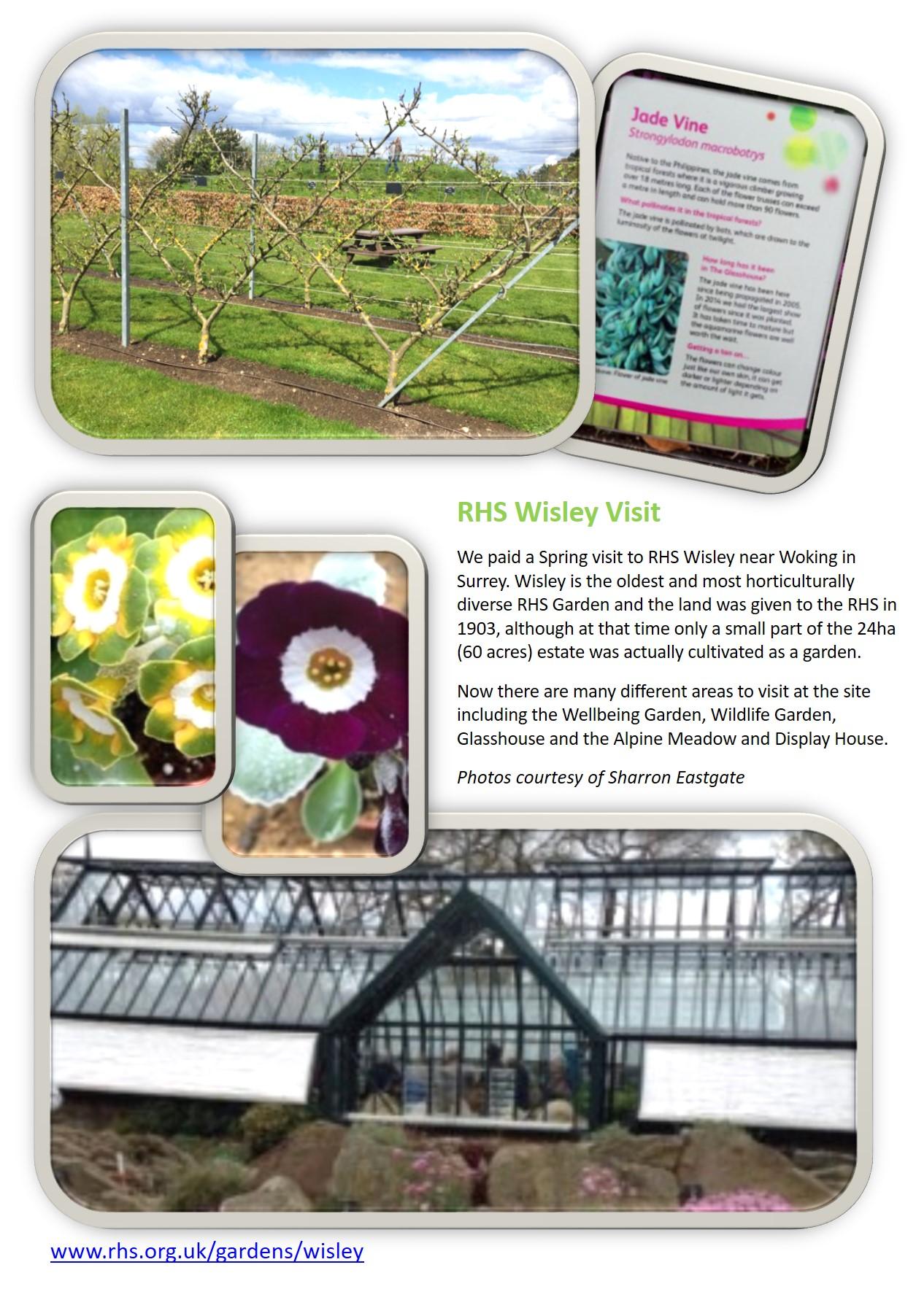 Gallery - Visit to RHS Wisley[4043]
